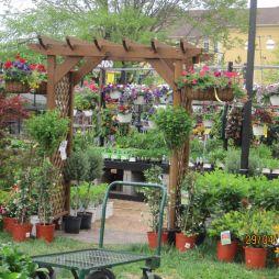 Virágpiac, Kirkwood