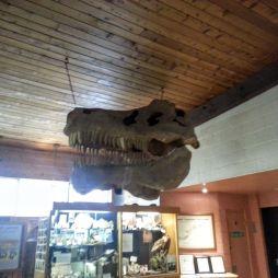 Dinokoponya