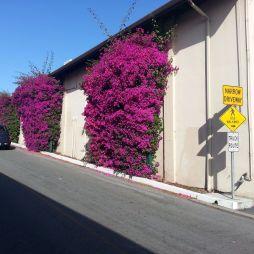 Utcácska, Monterey, CA