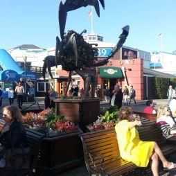Halászkikötő, SF
