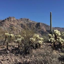 A Fekete Hegyek kaktuszai, Sitgreaves Pass, AZ