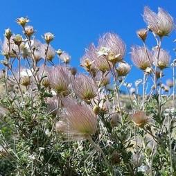 Sivatagi virágok