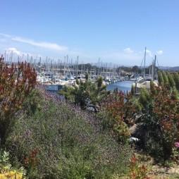 IMG_Monterey5
