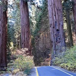 img_sequoiabigsur