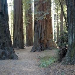 img_sequoiabigsur1