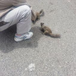 Scenic view azaz kilátó pont rámenős mókusokkal
