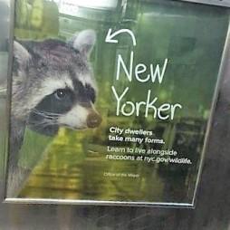 Én is new yorker vagyok. Central Park, NYC
